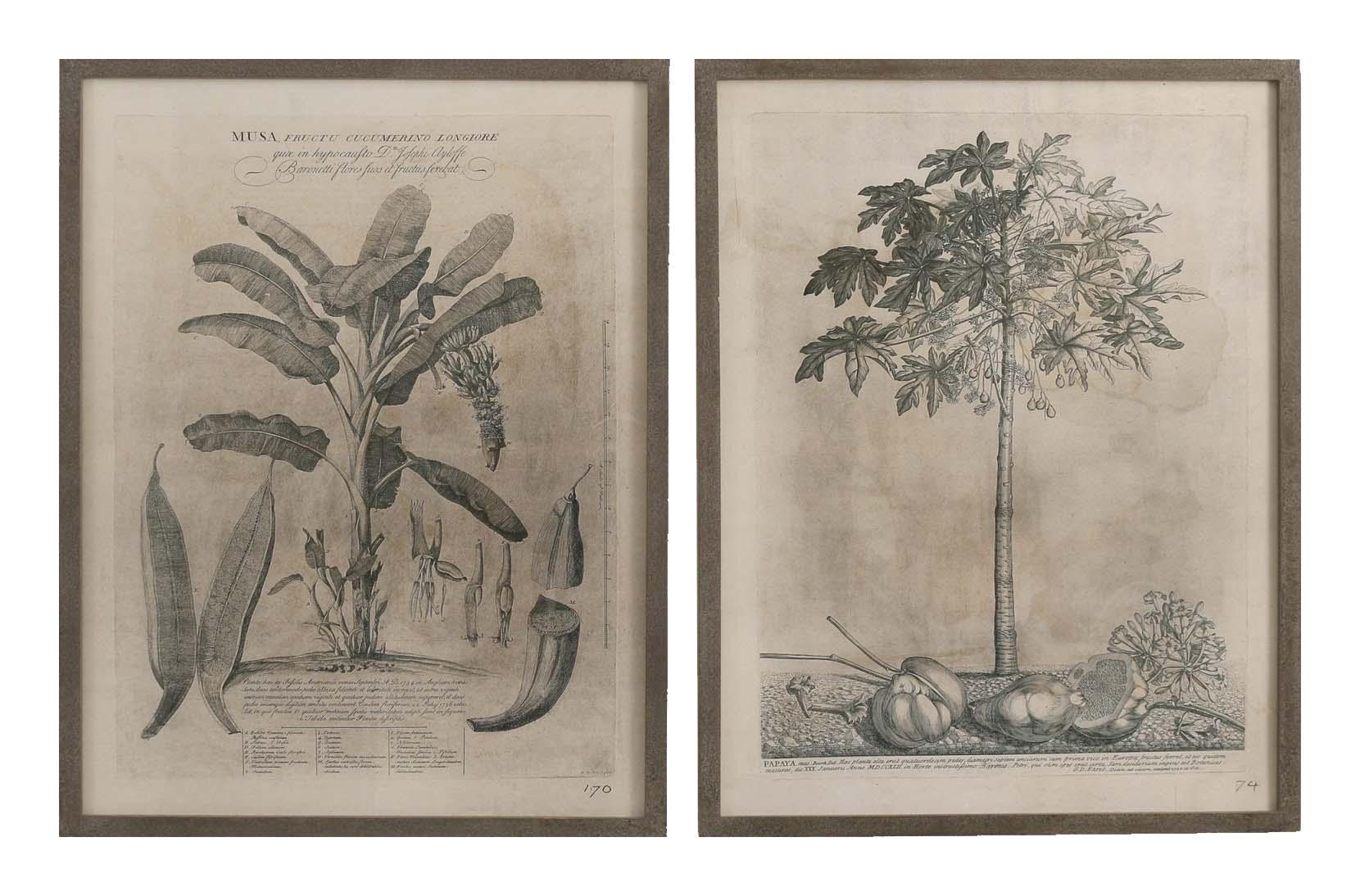 Brookby Set of 2 Framed Papaya Wall Art 1