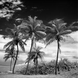 Coconut Trees Santa Maria Beach