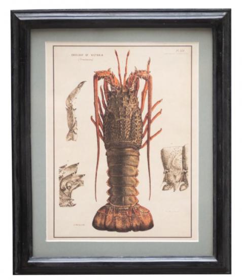 Small Lobster
